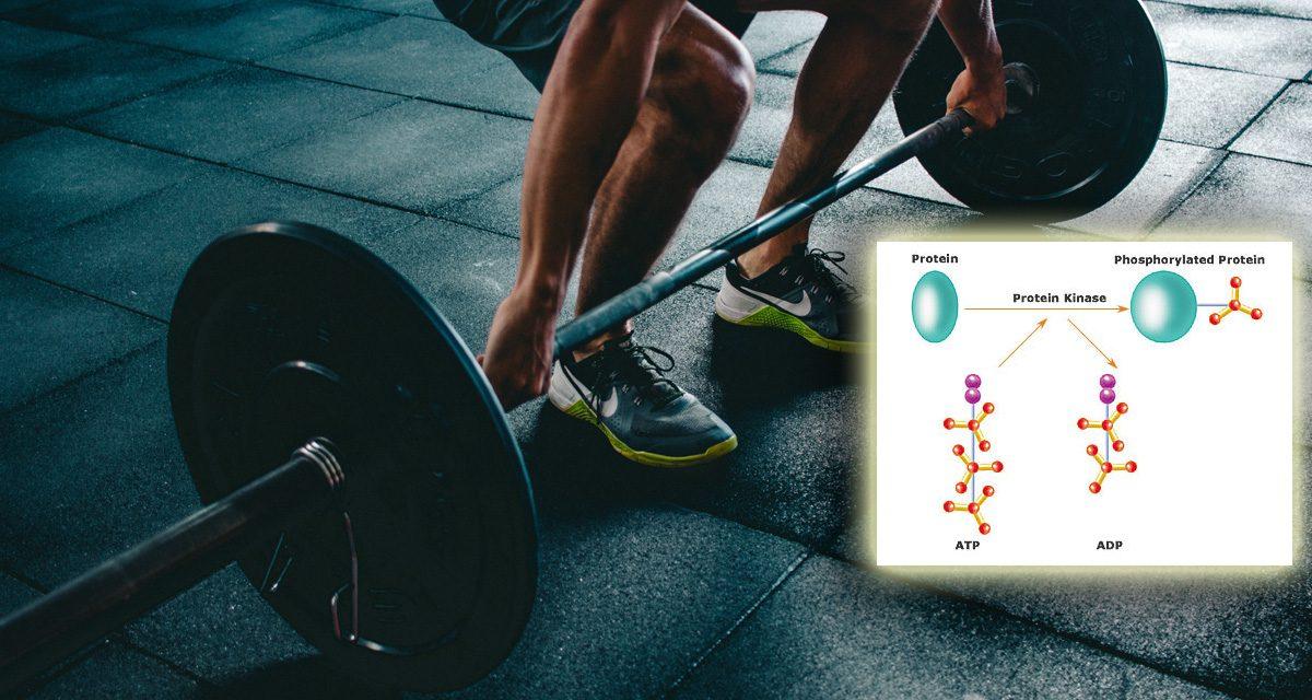 Protein Kinase